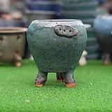 토어 수제다육화분 개구리롱|