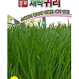 (아시아종묘/새싹종자씨앗) 귀리싹(30g) 