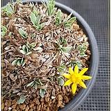 레트로사 아프카식물|