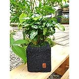 싱고니움 숯화분 공기정화식물 실내화초|