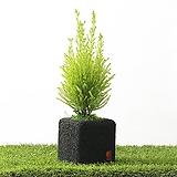 율마 숯화분 실내공기정화식물 화초 가습식물|