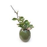 꽃피는 호야 수경재배 계란화분 주방화분|