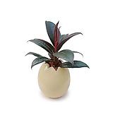 고무나무 계란화분 수경재배 주방화분|