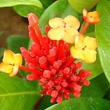 원종익소라-사계절꽃|