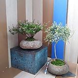 #목대쿠페아&무늬능소화-자연석(set)|