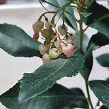 종딸기나무|
