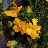 꽃대소품-유매 