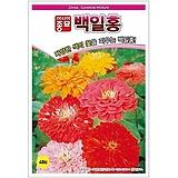 철갑환-887(실생. 씨방도 한가득)