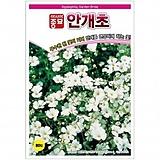 (아시아종묘/종자씨앗) 안개초(1000립) 