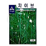 (아시아종묘/종자씨앗) 챠이브즈(400립) Echeveria Eve