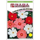 (아시아종묘/종자씨앗) 코스모스(500립) Echeveria Mose