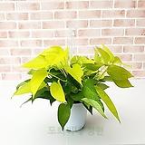 도희씨네 정원>> 쨍하게 컬러플한 형광스킨 중형100|