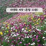 (아시아종묘/혼합종자씨앗) 야생화 23종 모음(1kg) 