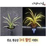 수제화분다육사각꽃큐빅-소62