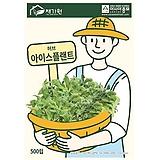(아시아종묘/허브종자씨앗) 아이스플랜트(500립) 