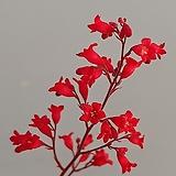 붉은꽃바위취 