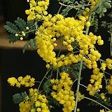 꽃대가 바글바글 노랑자귀 / 사진촬영 2020년 10월 31일 