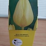 튤립/구근알뿌리/5개/노랑|