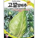 채소씨앗 고깔양배추 100립|