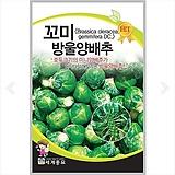 채소씨앗 꼬미방울양배추 100립|