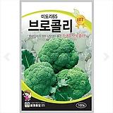 채소씨앗 미도리65 브로콜리 100립|