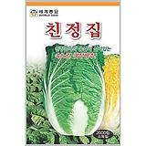 김장배추씨앗 친정집배추 1000립|