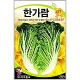 김장배추씨앗 한가람배추 2000립|