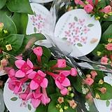 부바르디아 핑크35|