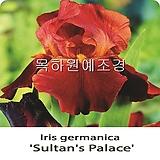 독일붓꽃,아이리스(술탄플레이스),수입구근,목하원예조경 