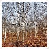 자작나무,백자작(실생2년특묘),목하원예조경 