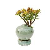 염좌 청자 운학 주판 中 인테리어 식물 고급축하화분선물 승진 DS-234|