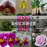 꽃세상 모음상품|