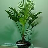 도시루 중대품 17번-실내식물-공기정화최고식물-동일품배송|
