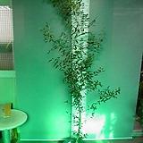 올리브나무특특대품26번-알러지-비염에 좋은효과-높이200센치-동일품배송|