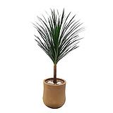드라세나 드라코 고급폴리화분 인테리어식물 개업축하화분 DLP-059|
