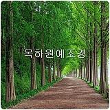 메타세콰이어나무(실생1-1묘.2년생특묘),목하원예조경 