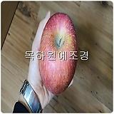 사과나무(부사),접목1년특묘,목하원예조경 Sedum torereasei