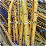 황금회화(접목2년특묘),목하원예조경 variegated