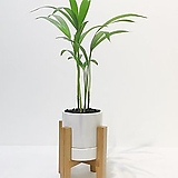 아레카야자 우드 스탠드 화분세트 공기정화식물|