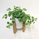 신홀리페페 우드 스탠드 화분 세트 공기정화식물|