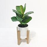 떡갈고무나무 우드 스탠드 화분 세트 공기정화식물|