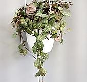 러브체인//공룡꽃식물원공기정화식물공중식물관엽식물야생화다육이선인장다육식물|