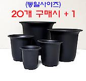 수입 플라스틱 NEW 라운드 화분 (코노피튬/리톱스/하월시아)|haworthia