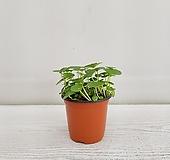 워터코인/공기정화식물/온누리 꽃농원|