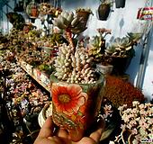크라운볼 한몸군생 묵은둥이(수제화분포함!!) Handmade Flower pot
