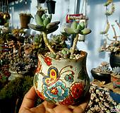 애플미인 한몸군생 묵은둥이(수제화분포함!!) Handmade Flower pot