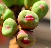 파가에 ssp 2두 뿌리무|