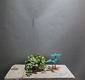 디시디아멜론 디시디아 기본 공룡꽃식물원 45|
