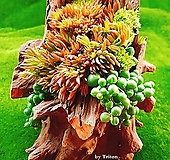 다육식물 천연나무화분 S|