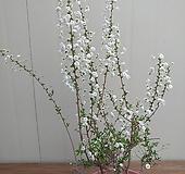 (특가)장미조팝 외목대 대품|